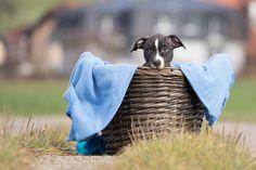 Tasty :D  Copyright: SITZ UND BLITZ Hundefotografie