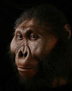 El primer ejemplar conocido fue un cráneo descubierto en 1959 en Tanzania datado en 1,75 millones de años. Ante el cambio climático, las especies de éste género recurrieron a la especialización de su aparato masticador para poder sobrevivir en un medio más seco. Así, con unas poderosas mandíbulas pudo tener acceso a raíces, tallos gruesos, etc.