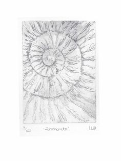 Original ammonite fossil etching no.3 in an edition of 100 £30.00