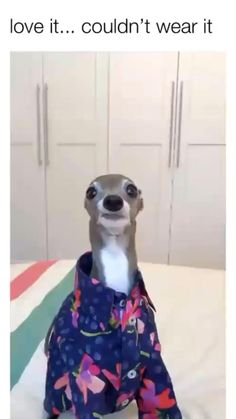 Funny Animal Jokes, Funny Dog Memes, Funny Dog Pictures, Funny Animal Videos, Funny Videos, Animal Memes, Clean Funny Memes, Funny Animal Images, Animal Humour