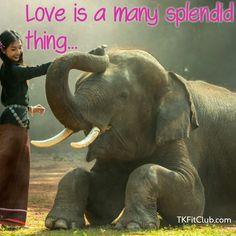 Elephant with Asian girl. Elephant with Asian girl, Thailand Shared by SasinTipchai on August 2016 at Link Elephant Symbolism, Elephant Art, Friendship Images, Friendship Status, Elephant Pictures, Phuket, Southeast Asia, Mammals, Cambodia