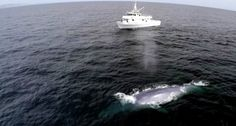 Blue Whale Proves TV Host Wrong