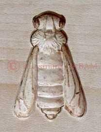 moule springerle abeille (springerle cookie mold carved as a bee)