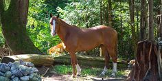 Strider at Listening Horse Ranch
