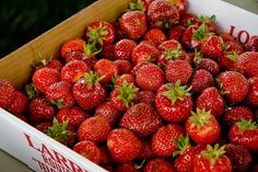 Strawberry Capitol,Plant City,Florida..The Strawberry Festival is the place to be when the berries are ripe!
