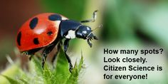 """Citizen Science for Earth Day"": Learn more about citizen science and get K-12 students and families involved! [Science Buddies, http://www.sciencebuddies.org/blog/2016/04/citizen-science-for-earth-day.php?from=Pinterest] #STEM #citizenscience #EarthDay"