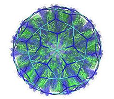 The picture shows a model of one of the SAPN particles that has been constructed by Newton Wahome based on a tiling by Giuliana Indelicato, illustrating how tiling theory predicts the surface architecture of the nanoparticle. Wahome and Indelicato are the joint first authors of this paper.