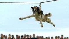 Please sign and share this Petition. Many thanks! -----Stop Horrific 'Dog Spinning' Ritual · Change.org
