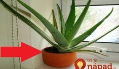 Rada pre všetkých, ktorí majú doma Aloe Vera: Ak nechcete prísť o jej liečivé účinky, na zimu urobte toto opatrenie!