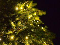 Havupallo - Kohti Joulua -joulublogi Christmas Tree, Holiday Decor, Home Decor, Blog, Teal Christmas Tree, Decoration Home, Room Decor, Xmas Trees, Blogging