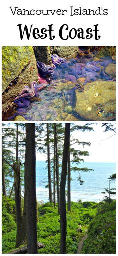 Are you looking for a romantic getaway on Vancouver Island? Take these 6 simple steps, and explore the Southwest coastline of Vancouver Island. Discover Botanical Beach, Port Renfrew, the beaches near Jordan River and beautiful Sooke!