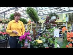 Stauffers of Kissel Hill Garden Centers' expert, Wanda, shares how to grow and care for tropical flowers & plants like cannas, hibiscus, mandevilla, passion flower, banana plants and bougainvillea! Get more info about Stauffers at www.skh.com.