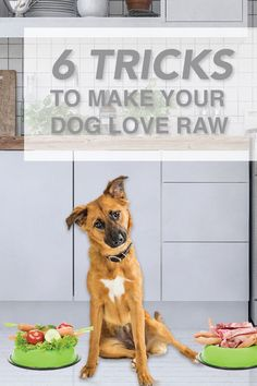 Raw food is the best choice for your dog's health and longevity.  But you know your dog best ... so if you have a picky eater on your hands, you'll know.  This can be frustrating for you as an owner, and for your dog.  There's more to it than you think ...  These tricks will have your dog loving raw in no time!