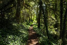 "90377: "" Mount Davidson Hike by rogergabrielgarcia on Flickr. """