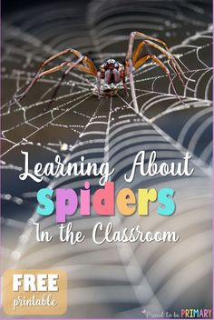 Brave enough to teach your students about spiders this fall or Halloween? This spider post includes a ton of activities - science, non-writing writing, life cycle, and an art project to entertain students in learning about spiders. #fallscience #scienceforkids #fallactivities #spideractivities #spiderscience