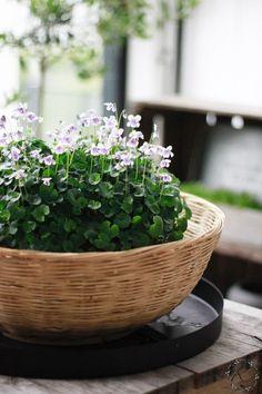 # summer flowerLOVE – 10 favorites- – 10 suos… – World of Flowers Pot Plante, Garden Shop, Garden Boxes, Diy Garden Decor, Plant Care, Summer Flowers, Shade Garden, Garden Projects, Garden Ideas