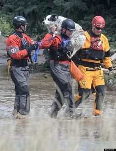 The Silent Victims Of Colorado's Historic Flood: Pets And Livestock