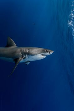 Sharks are amazing creatures!