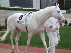 """A lovely rare white Japanese Thoroughbred race horse named """"White Vessel. never seen a white thoroughbred before All The Pretty Horses, Beautiful Horses, Animals Beautiful, Rare Horses, Thoroughbred Horse, Clydesdale Horses, Andalusian Horse, Friesian Horse, Breyer Horses"""