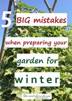 avoid these 5 things when preparing your garden for winter and your garden will…