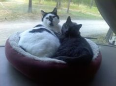 RV Cats - How To Travel With Cats While Maintaining Your Sanity Good.