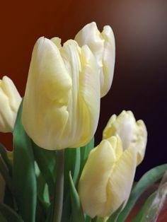 Stampato in ITALIA | Decidi tu le DIMENSIONI | Molti MATERIALI fra cui scegliere | Qualità HD  Una bella #foto da appendere in #salotto per #doyoulikemyart #DYLK #pixtury #tulipani #tulip #fiori #flowers