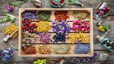 Herbal Tinctures, Herbal Tea, Herbalism, Healing Herbs, Medicinal Herbs, Witchcraft Herbs, Smoking Is Bad, Red Raspberry Leaf, Evening Primrose