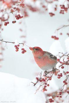 赤い鳥と ... a sublime little bird and a sublime photo