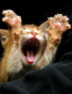 I tried not to pin it - but I had to... I couldn't stop myself - dammit that's a cute cat!