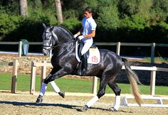 Andalusian horse. Spain