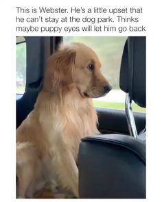 Bruno gets all his shots tomorrow. I'll be getting real puppy eyes soon . - Dogs and Other Funny Animals - Chien Funny Animal Memes, Funny Animal Videos, Dog Memes, Cute Funny Animals, Funny Animal Pictures, Cute Baby Animals, Funny Dogs, Animals And Pets, Funny Chihuahua