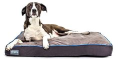 First Quality 6 Thick Orthopedic Dog Bed