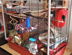 Pet Rat Cages, Pet Rats, Pets, Rat Care, Small Animal Cage, Imagination, Environment, Exercise, Facebook