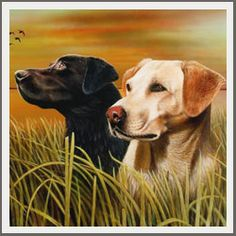 Lovački psi Labrador Retriever, Dogs, Animals, Labrador Retrievers, Animales, Animaux, Pet Dogs, Doggies, Animal