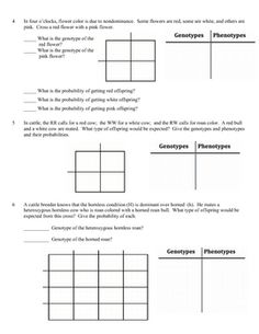 Monohybrid Cross Worksheet | Different types, Different types of ...