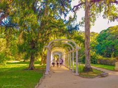 Recorrido por el Jardín Botánico del Parque Nacional Tijuca, Rio de Janeiro, Brasil.....!!!