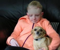"""Chihuahua Who Saved 8-Year-Old Jenna Desrochers From Pit Bull Attack Gets """"Big Hero"""" Award."""