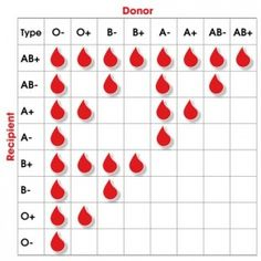 There are eight blood groups. Each blood group is only compatible with certain other groups, so matching the blood groups of donors and patients is vital. Medical Facts, Medical Information, Medical Students, Nursing Students, Blood Type Chart, Nursing School Notes, Blood Groups, Medical Anatomy, Medical Laboratory