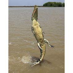 Hermes Birkin bag 25 Crocodilus Niloticus Blue Marine CC Gold hardware 2015