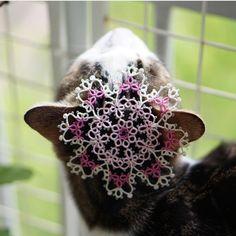 (C) 사루  #태팅 #태팅레이스 #손뜨개 #핸드메이드 #수공예 #고양이 #인스타래래 #cat #cats #tatting #tattinglace #handmade #handcrafted #lacework #doily