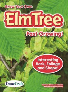 Siberian Elm Seed Pack CLEARANCE!