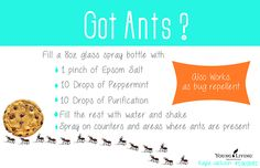 Ant Spray. Young Living essential oils. To get started with essential oils or to learn more, go to http://bit.ly/CCappsYL or email me at cariebill@gmail.com, Carina Capps Independent Distributor # 1544827