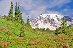 Mount Rainier National Park..Take Wonderland Trail - 93 miles loop 10 day trip.  Circumnavagation of massive Mt. Rainier. It is one of the true epic hikes in the National Park system