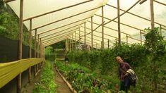 Invernadero en guadua - Comunidad Religiosa Las Delicias, Quindío, Colombia.
