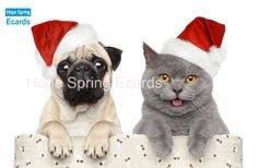 Dog and cat in red Christmas hat. Cat and dog in red Christmas hat on a white ba , Christmas Hat, Christmas Animals, Merry Christmas, Christmas Ecards, Christmas Kitten, Christmas Puppy, Nightmare Before Christmas, Pet Safe, Animal Wallpaper