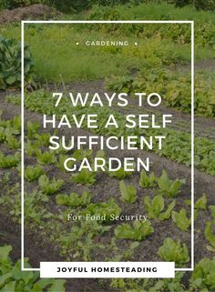 Self sufficient gardening - gardening that allows you to grow your own food without relying on a grocery store - is possible.