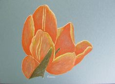 Flower: colored pencil on board