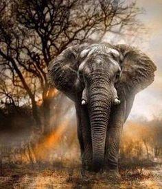Meian,Diy Diamond Painting Cross Stitch Diamond Mosaic Needlework Crafts Full Diamond Embroidery elephant Home new Year Decor Cross Paintings, Easy Paintings, Your Paintings, Indian Paintings, Abstract Paintings, Elephant Art, African Elephant, Elephant Paintings, Elephant Family
