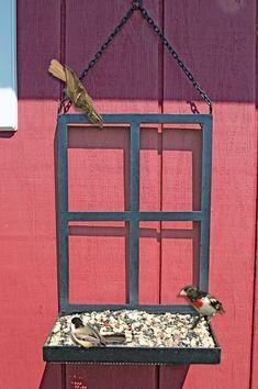 Window Frame Platform Bird Feeder #buildaviary #aviariesideas #birdhousetips