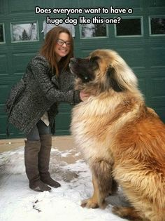 I love big dogs